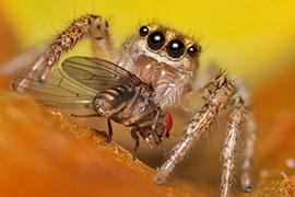 raymond-van-dijk-rvd-bedrijfsdiensten-ongedierte-ongediertebestrijding-insecten-knaagdieren-muizen-ratten-vliegen-wespen-kakkerlakken-spinnen-bestrijding