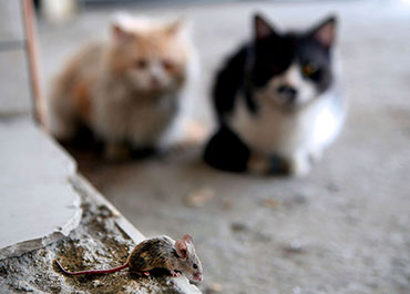 raymond-van-dijk-rvd-bedrijfsdiensten-facilitaire-diensten-muizen-muizenplaag-muis-ongedierte-ratten-rattenplaag