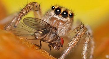 raymond-van-dijk-rvd-bedrijfsdiensten-facilitaire-diensten-ongedierte-bestrijding-insecten-spinnen-wespen-wespennest-ratten-muizen-plaag-kakkerlakken-plaag_NAV