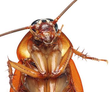 raymond-van-dijk-rvd-bedrijfsdiensten-facilitaire-diensten-ongedierte-bestrijding-wespen-muizen-ratten-kakkerlakken-spinnen-spinnenweb-muggen-overlast-kakkerlakken-plaag