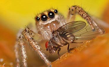 raymond-van-dijk-rvd-bedrijfsdiensten-facilitaire-diensten-spinnen-spinnenplaag-spinnenweb